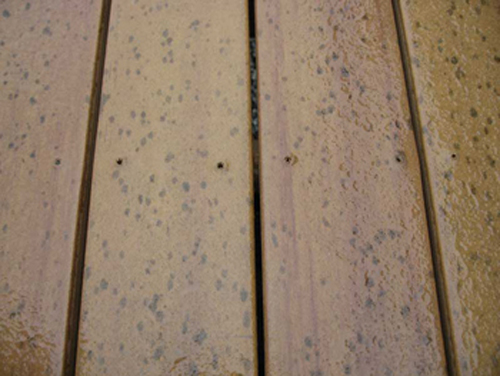 Moldy Composite Deck Pictures
